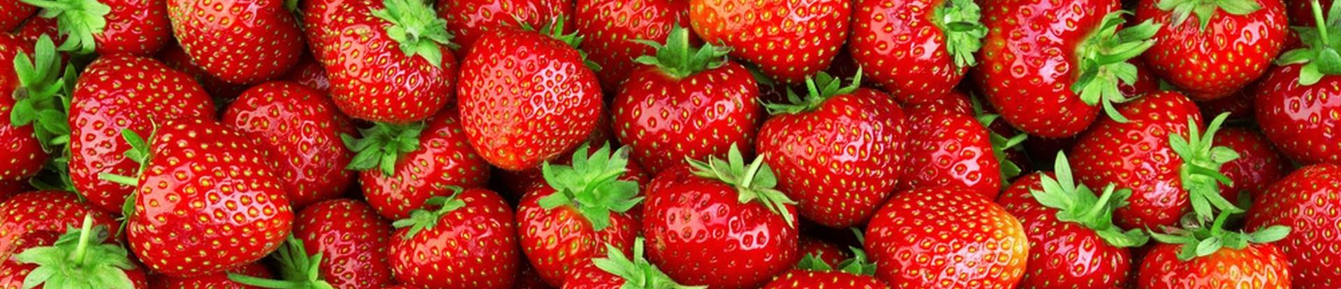 selvpluk jordbær nordjylland